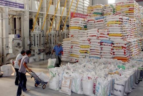 Trung Quốc thay đổi chính sách thuế nhập khẩu, gạo nếp Việt Nam lại bị ép giá
