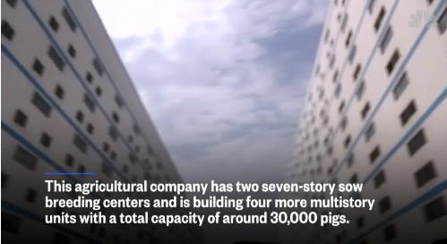 Khách sạn cao tầng phục vụ chăn nuôi lợn ở Trung Quốc