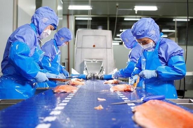Giá cá hồi thế giới dự báo tăng trước nhu cầu bùng nổ từ Trung Quốc