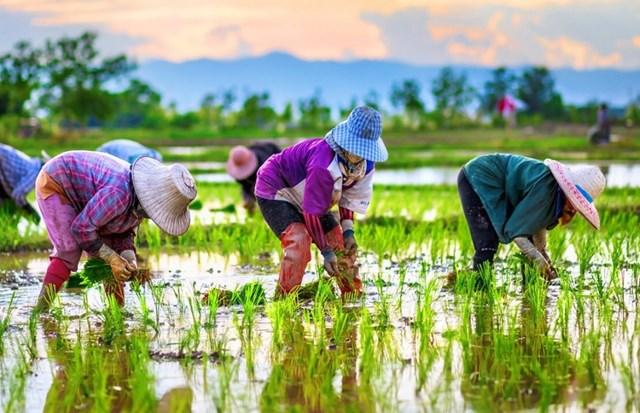 [Phần 2] 5 sáng kiến thay đổi ngành nông nghiệp Đông Nam Á