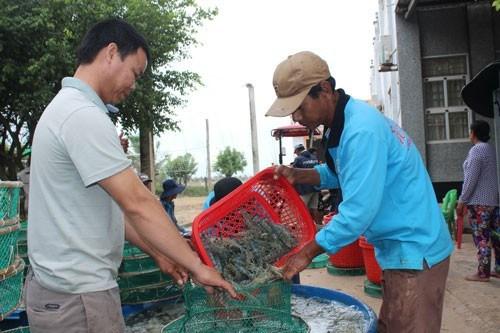 Ra mắt sàn giao dịch tôm đầu tiên ở Việt Nam