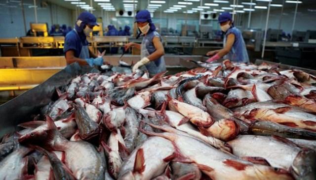 40 năm thăng trầm của cá tra, basa Việt