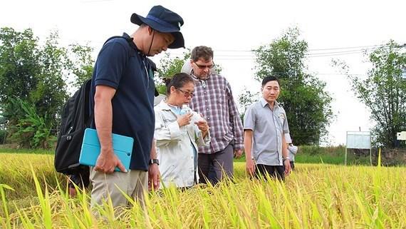 Xuất khẩu gạo: Tìm thị trường mới