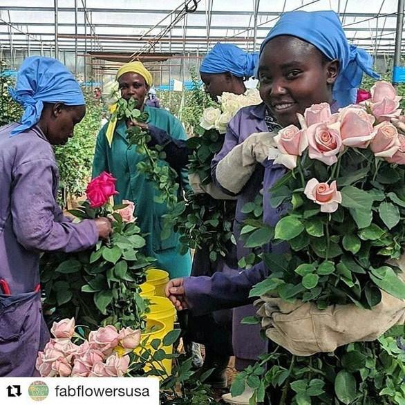 Châu Phi thách thức vị trí số 1 của Hà Lan trong ngành hoa tươi