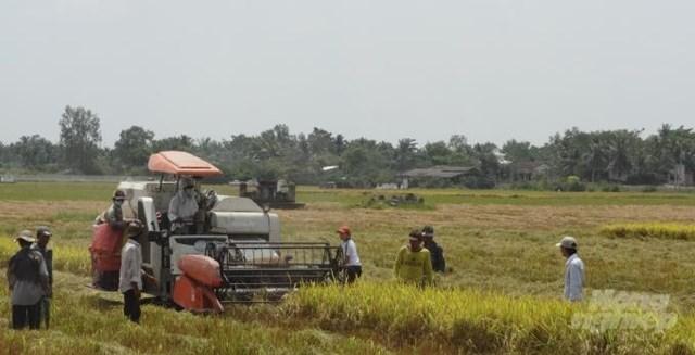 Sôi sục thị trường lúa gạo