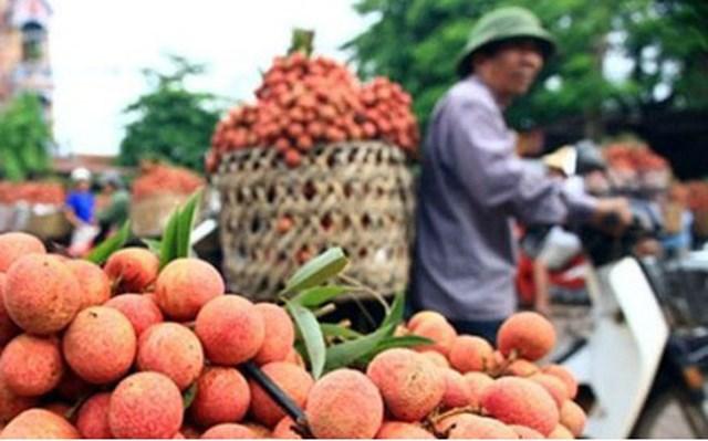 Dịch Covid-19 liệu có ảnh hưởng việc xuất khẩu trái vải sang Nhật Bản?