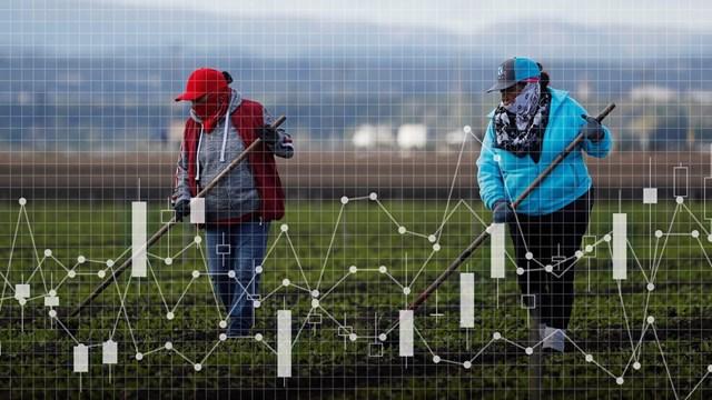 Những yếu tố nào đang khiến cho giá thực phẩm toàn cầu tăng chóng mặt?