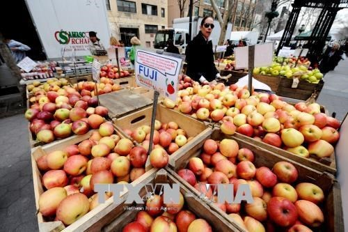 Xuất khẩu táo của Mỹ giảm mạnh kế từ đầu niên vụ 2020-2021