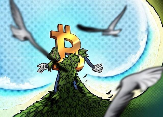Các quỹ Bitcoin xanh đang trở thành trend mới trong không gian tiền điện tử