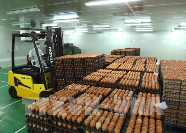 Trứng gia cầm tăng giá trở lại sau thời gian dài bán lỗ vốn