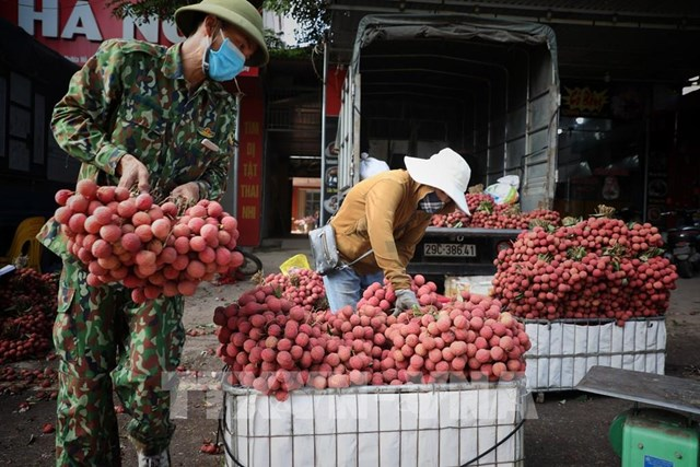 Bắc Giang thu hơn 6.800 tỷ đồng từ vụ vải thiều năm 2021