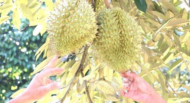 Xuất khẩu trái cây của Thái Lan tăng mạnh