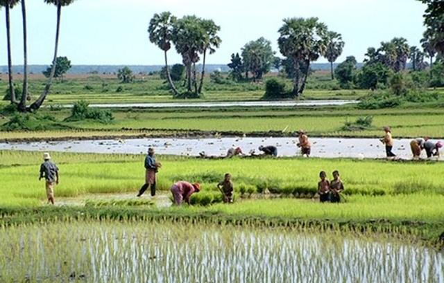 USDA dự báo sản lượng, tiêu thụ, tồn trữ gạo thế giới năm 2021