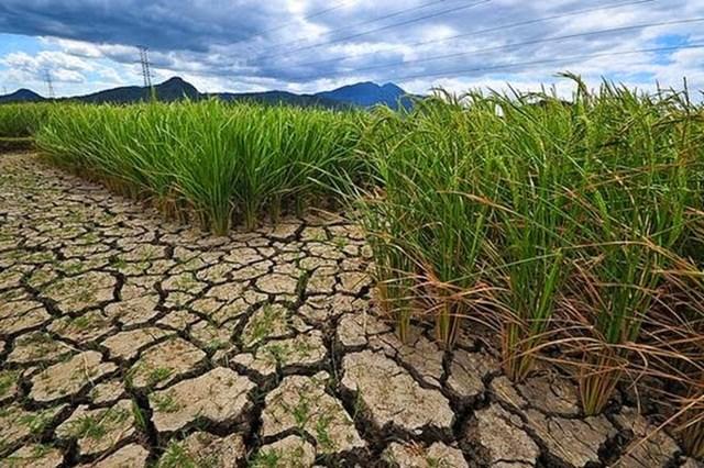 Hạn hán tại Sri Lanka làm giảm sản lượng gạo