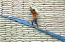 Phản hồi thông tin xin giấy phép xuất khẩu gạo phải tốn không dưới 20.000 USD
