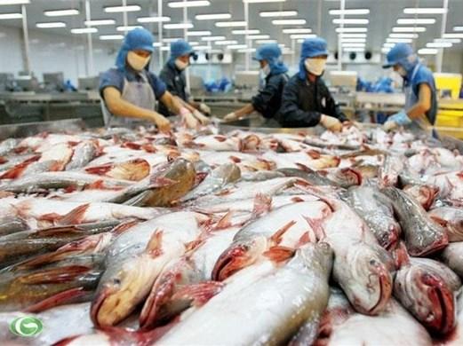 Cung khan hiếm: giá cá tra tiệm cận mức kỷ lục năm 2011-2012