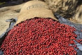 Báo cáo của USDA về thị trường cà phê thế giới