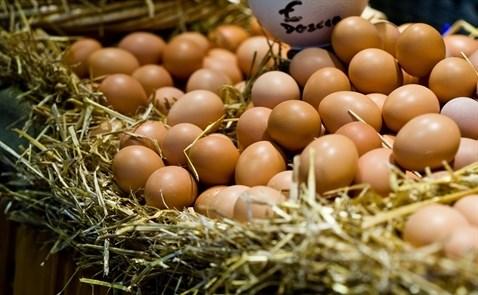 """Đại gia Nhật muốn """"chen chân"""" vào thị trường trứng Việt Nam"""