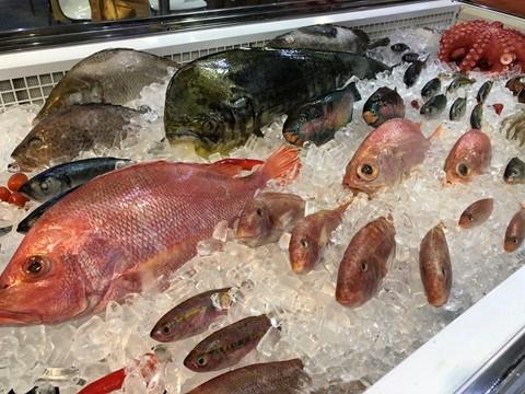 Hoạt động đánh bắt cá trên toàn cầu giảm mạnh do Covid-19