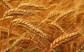 MXV: Tình hình giao hàng nông sản Mỹ tuần 28/2-5/3/2020