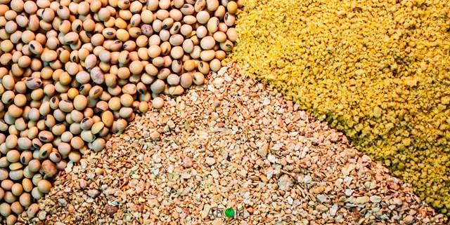 Giá nông sản và kim loại thế giới ngày 14/10/2019