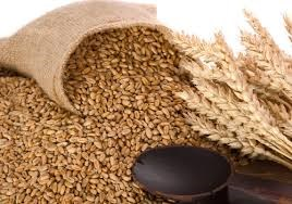 Báo cáo của USDA về thị trường ngũ cốc thế giới