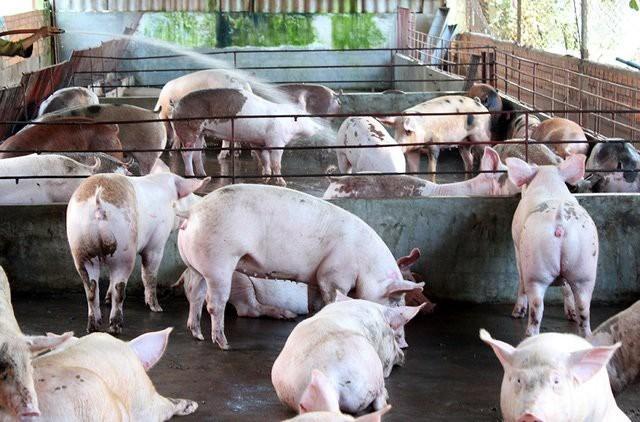 Trung Quốc thuê đất Lào, Campuchia sản xuất: Thế mạnh Việt Nam lao đao