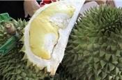Sầu riêng và khoai lang được xuất khẩu sang Trung Quốc