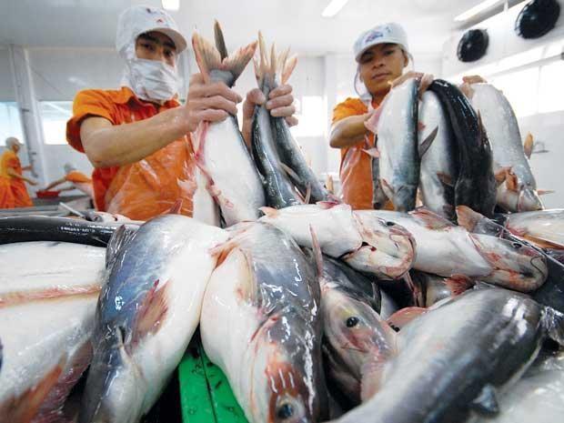 Giá cá tra và tôm thẻ chân trắng tiếp tục diễn biến trái chiều