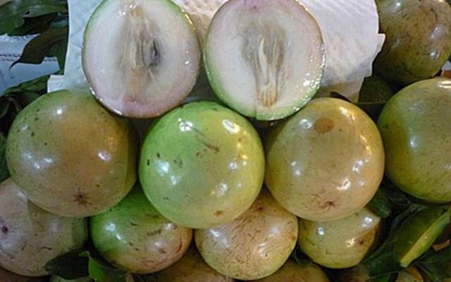 Những trái ngon Việt có 'vé' vào thị trường Mỹ