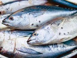 5 thách thức khi xuất khẩu cá ngừ đông lạnh sang châu Âu