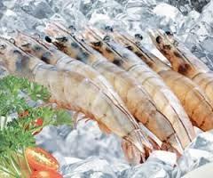 Kết luận đối với sản phẩm tôm nước ấm đông lạnh của Việt Nam