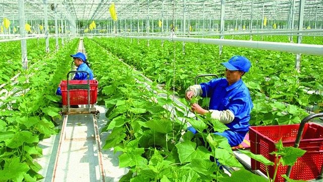 Hướng dẫn thực hiện NĐ của CP về chính sách khuyến khích DN đầu tư vào nông nghiệp