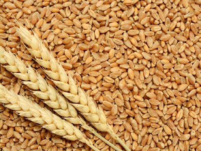 Kim ngạch nhập khẩu lúa mì từ Mỹ tháng đầu năm 2020 tăng đột biến