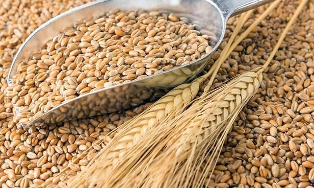 Nhập khẩu lúa mì từ Mỹ tăng đột biến trong hai tháng đầu năm 2020