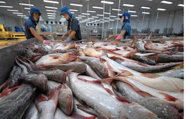 Gặp khó giữa dịch COVID-19, xuất khẩu cá tra tìm cơ hội tại thị trường mới