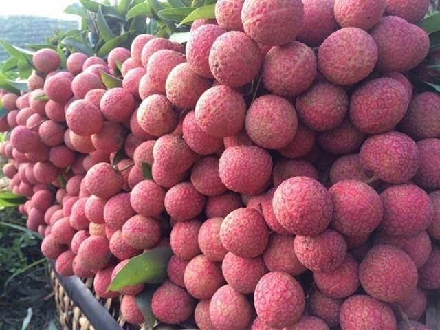 TT nông sản ngày 05/5: Giá rau, củ giảm mạnh; xuất khẩu vải tươi sang Nhật gặp khó