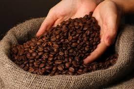 ICO: Chỉ số giá cà phê ICO tháng 10 giảm trở lại