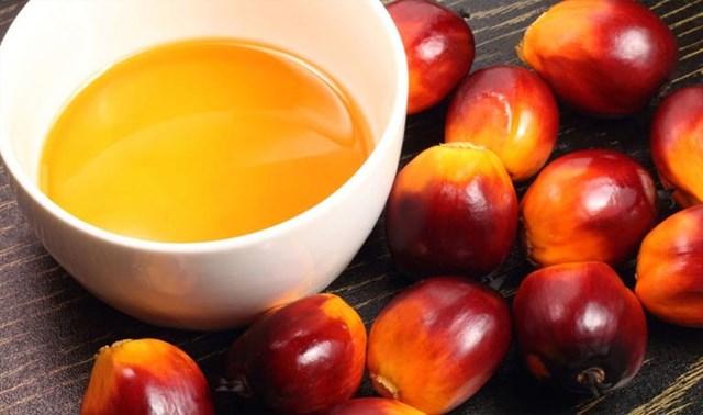 MPOC: Dự báo năm 2021 tồn trữ dầu cọ Malaysia ở mức thấp, giá tăng cao