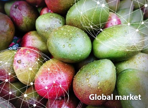 Châu Á: Sản lượng xoài lớn khiến cung vượt cầu tại thị trường Trung Quốc đại lục