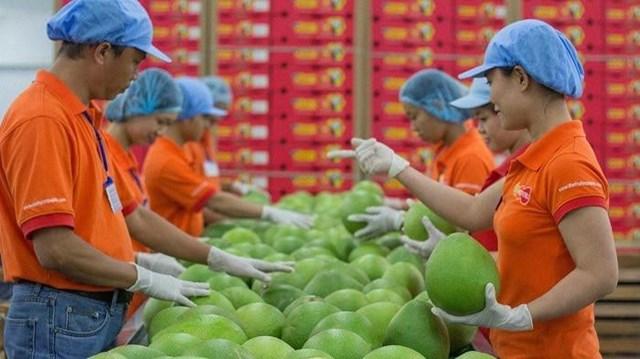 Bất chấp dịch bệnh, xuất khẩu nông sản tăng mạnh hướng đích 45 tỷ USD