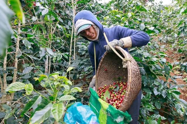 6 công ty tiên phong trong phát triển bền vững ngành cà phê