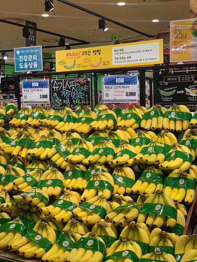 Cạnh tranh với Philippines, quả chuối Việt Nam cần nâng cao chất lượng tại thị trường Hàn Quốc