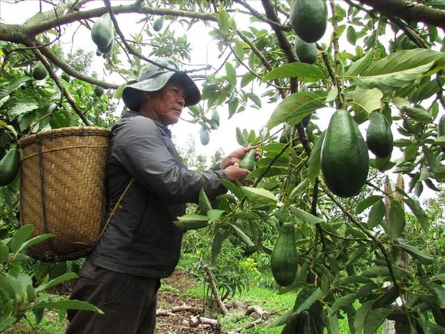 Loại quả gì được dự báo sẽ xuất khẩu nhiều nhất, ở Việt Nam loại quả đó trồng ở đâu?