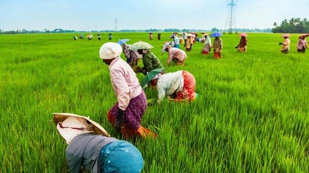 """FAO phát động """"Phát triển xanh các nông sản đặc biệt"""""""