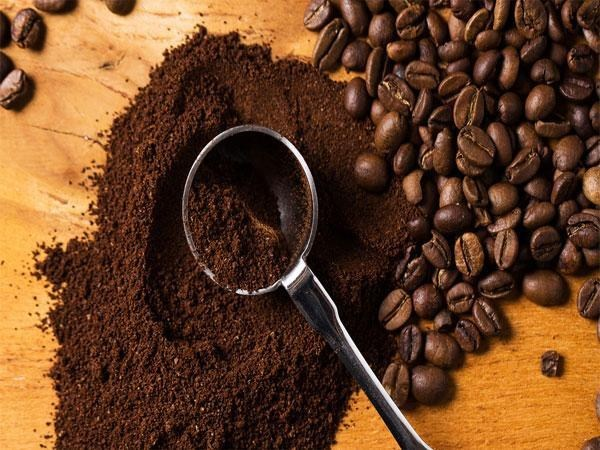 Giá cà phê trong nước ngày 10/10/2017