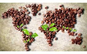 Giá cà phê trong nước ngày 10/1: Tăng vượt dự đoán