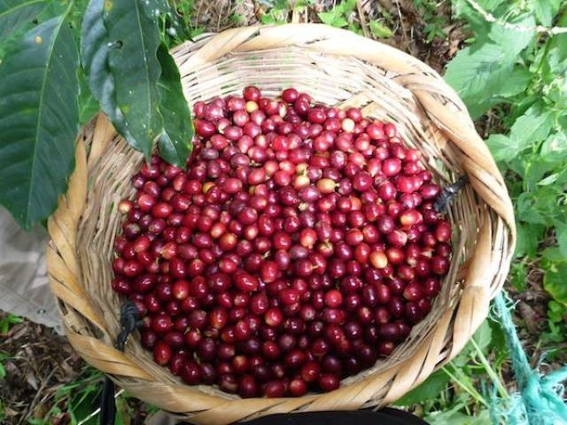 TT cà phê ngày 16/11: Giá tăng tiếp 100 đồng/kg