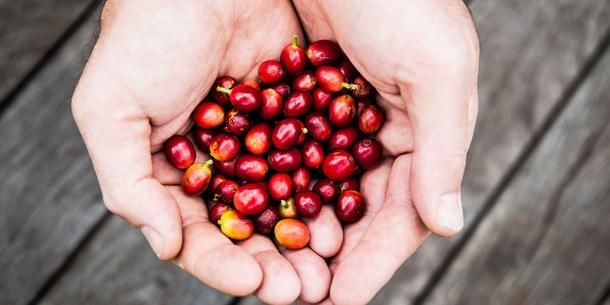 TT cà phê ngày 17/4: Đảo chiều giảm nhẹ