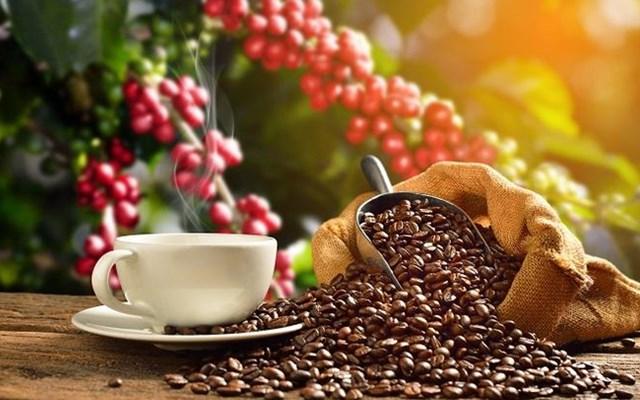 TT cà phê ngày 02/5: Mất 500 đồng/kg trong phiên giao dịch đầu tháng 5